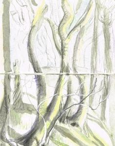 trees wood 2